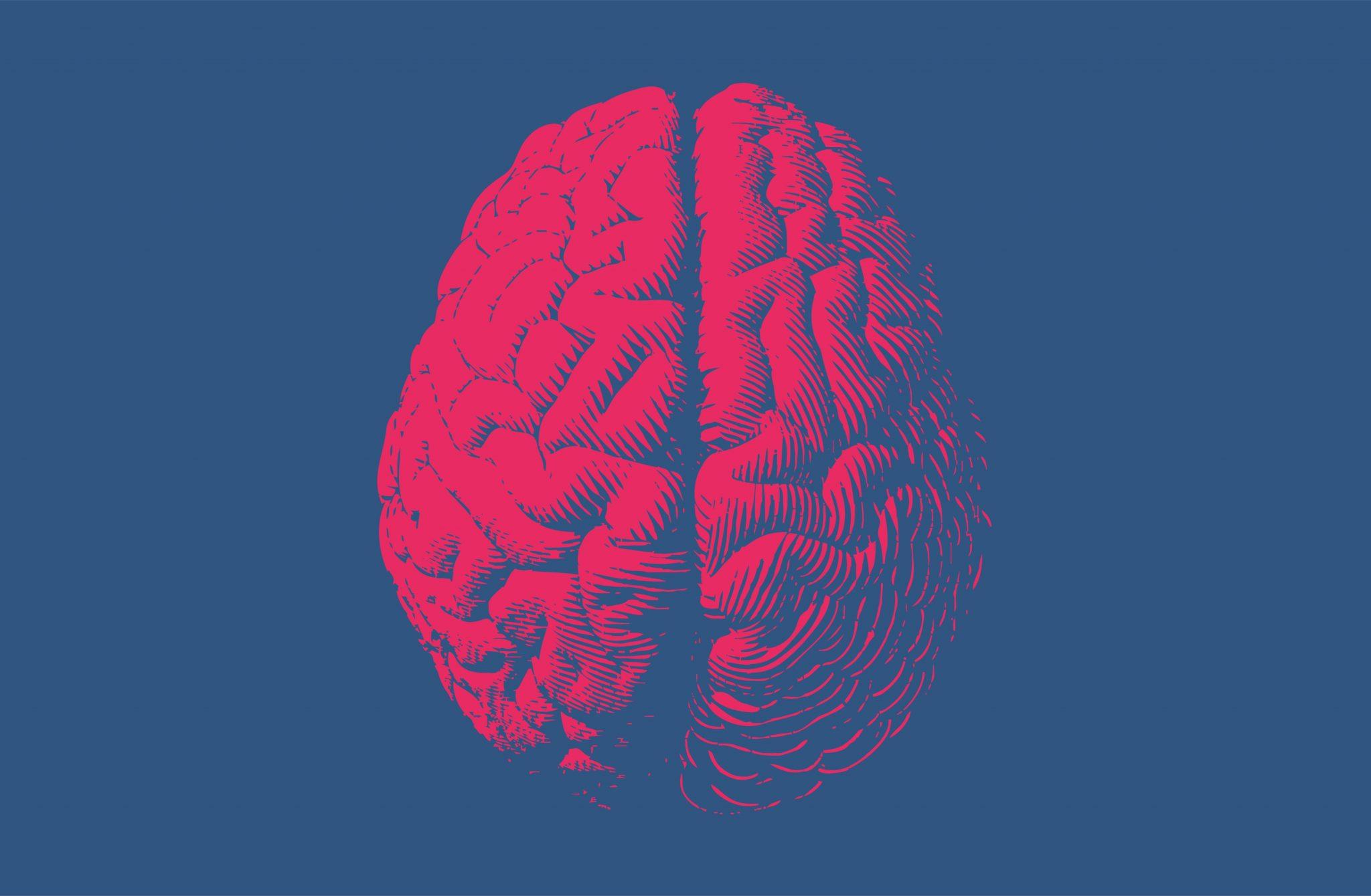 pink brain on blue background